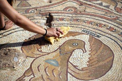 Una trabajadora de la Autoridad de Antigüedades de Israel limpia un piso de mosaico en los restos de una iglesia de 1,500 años de antigüedad donde los arqueólogos dijeron que fue construido, en honor de un 'glorioso mártir' cuya identidad se desconoce, en Ramat Beit Shemesh, Israel 23 de octubre de 2019 REUTERS / Ronen Zvulun