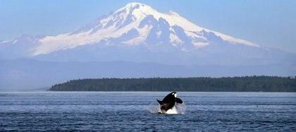 El Estrecho de Puget, en el estado de Washington, donde fue capturada Lolita