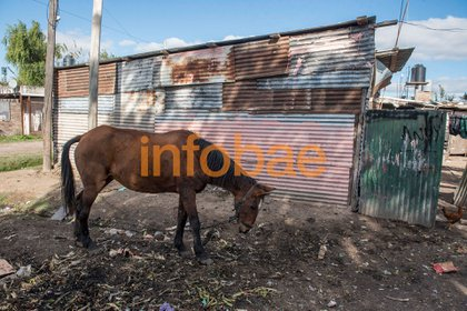 Pobreza extrema: el rancho de la tía Isabel. (Guille Llamos)