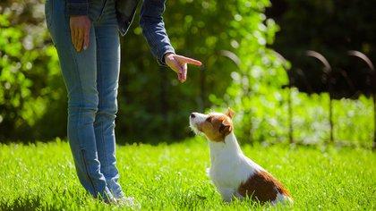 Se han popularizado palabras alemanas para las órdenes hacia los perros lo importante es usar palabras cortas y de sonido claro (Shutterstock)