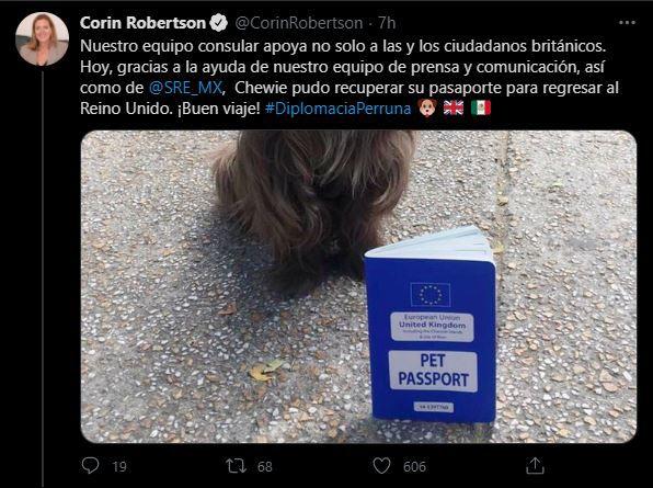 Chewy, el perrito británico que perdió su pasaporte en México