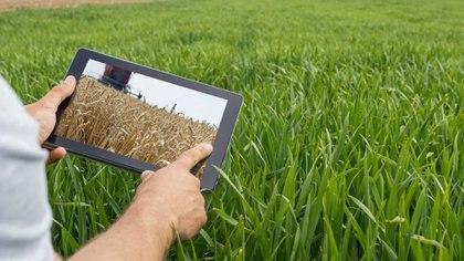 La existencia de procesos de digitalización permitiría al agricultor poseer herramientas en sus dispositivos móviles de sencilla activación que permitiera mantener registros y, a través de ellos, alcanzar el cumplimiento de los procesos de trazabilidad y certificación. Foto: Archivo DEF