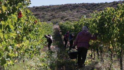 LA industria vitivinícola puede ser una de las favorecidas por la apertura del intercambio comercial