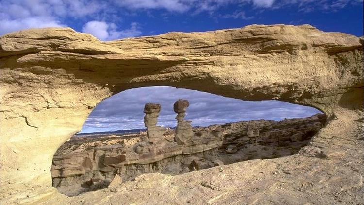 La Patagonia Argentina tiene un amplio registro paleobotánico