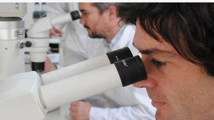 En el INTA, los científicos trabajan con la nueva tecnología que puede manipular el ADN bovino y equino, inclusive