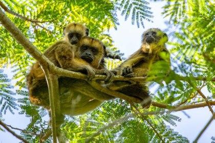 """""""Iberá está posicionado como el mejor destino de avistaje silvestre de la Argentina. Entre flora y fauna habitan alrededor de 4000 especies"""" (Matias Rebak)"""