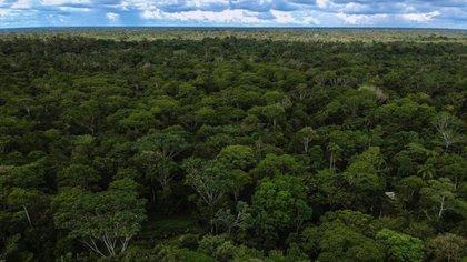 Departamento del Amazonas, Colombia. Foto: Ministerio de Ambiente y Desarrollo Sostenible.
