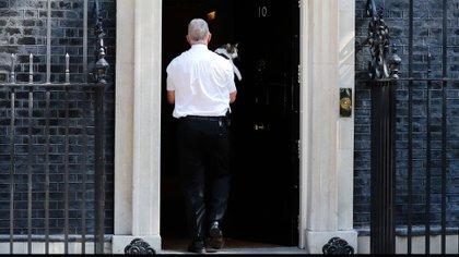 Larry, el gato callejero de Downing Street, es recogido y llevado dentro de la residencia en el centro de Londres el 24 de mayo de 2019 (Reuters)