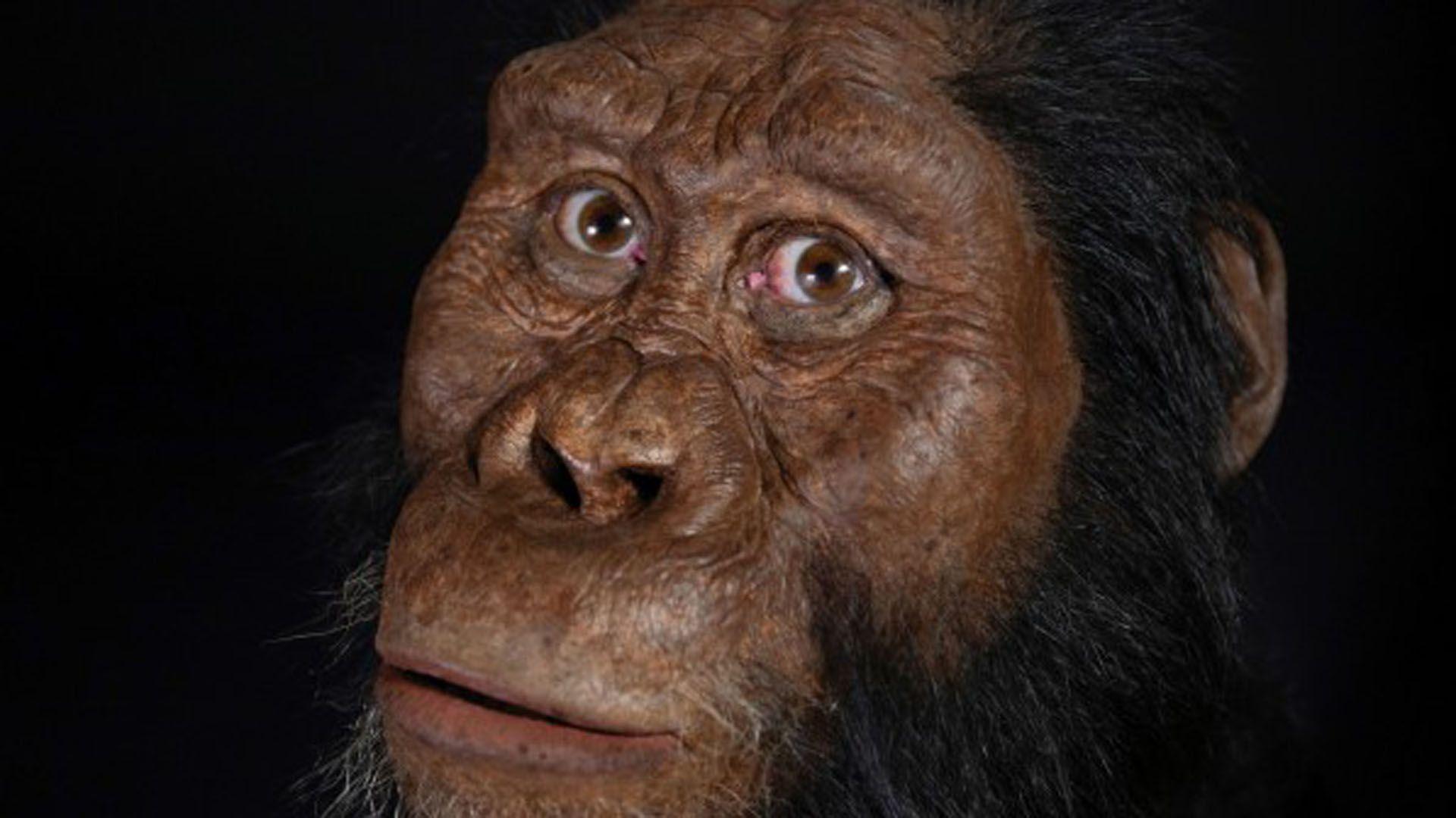 el Afarensis es una evolución del Anamensis y que mientras el primero habitó la Tierra desde hace 3,8 millones de años hasta hace 3 millones de años, el segundo lo hizo desde hace 4,2 millones hasta 3 millones (EFE)