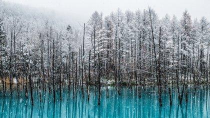 La Laguna Azul de Biei (Hokkaido) es un lugar realmente sorprendente (istock)