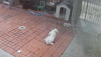 El perro de Alfonso apareció retorciéndose en las imágenes (Foto: Facebook)