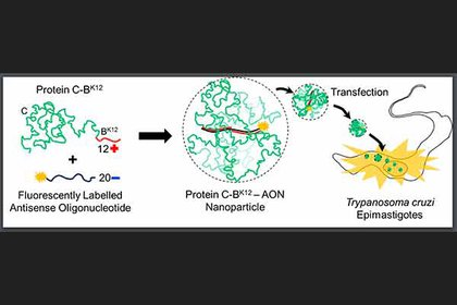 Estas nanopartículas se introduzcan al microorganismo y lo dañen, pero no al pacienteFoto: (UNAM)