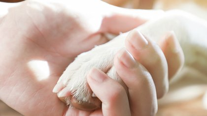 Es importante que ante el primer contacto, la mascota se sienta incluida y feliz por el vínculo adquirido