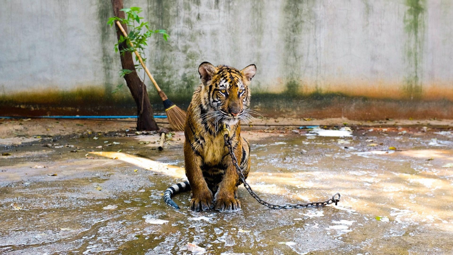 (Foto: Animal Heroes)