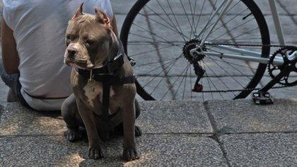 Sólo serán autorizadas las operaciones que un veterinario considere por razones médicas (Foto: Cuartoscuro)