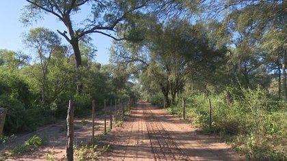 La Argentina perdió 6,5 millones de hectáreas de bosques nativos entre 1998 y 2018