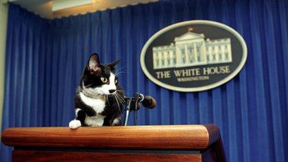 Socks Clinton, quizás uno de los gatos más famosos de los años 90 (1989-2009)