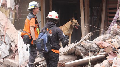 Están entrenados para participar en las tareas de rescate (Foto: Asociación Civil Escuela Canina de Catástrofe)