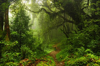 La fecha surgió para concientizar sobre la importancia de los recursos arbóreos para la Tierra, y de la necesidad de enseñar a niños y adultos sobre las plantas y sus cuidados para preservarlas (Shutterstock)