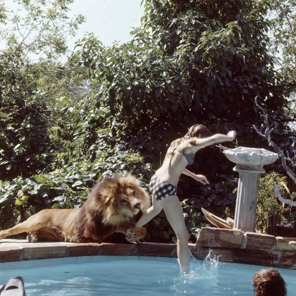 Un entrenador le sugirió a Tippi que la mejor manera de familiarizarse con un león era conviviendo con uno y adoptaron a Neil