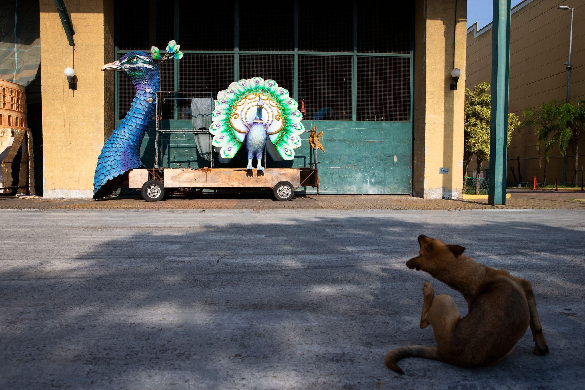 """Un perro frente a un carro preparado por la escola do samba """"Unidos da Tijuca"""" para el desfile de carnaval 2020 de Río de Janeiro. Debido a la pandemia, Río de Janeiro postergó el carnaval del sambódromo, que iba a tener lugar en febrero, y canceló el carnaval en las calles. La nueva fecha depende de cuándo se lleve a cabo una campaña de vacunación. La asociación que agrupa a las escolas do samba LIESA espera que pueda ser en julio. Foto: Fernando Souza/dpa"""