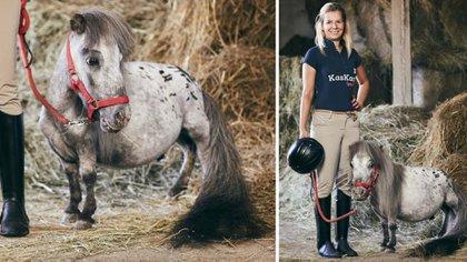 Bombel, el caballo más bajo del mundo, mide 56,7 centímetros hasta la cruz.