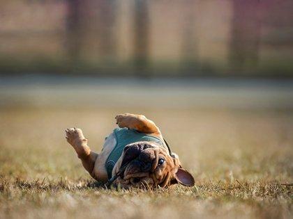 Los animales no escatiman ni pervierten las caricias, al contrario, las usan, las disfrutan y viven con ellas la felicidad de usar su cuerpo en plenitud (Shutterstock)
