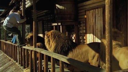 Los integrantes del elenco y del equipo técnico se vieron forzados a convivir con animales salvajes que, a su vez, no estaban preparados para convivir con ellos.