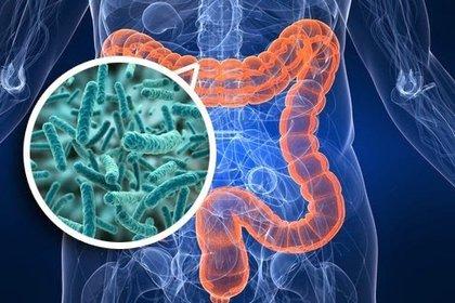 El descubrimiento de un perfil del microbioma intestinal saludable es el futuro de la medicina gastroenteróloga