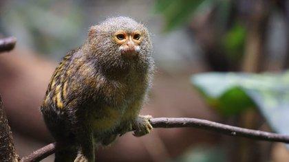 En una lista de 17 países, Brasil, Colombia y Ecuador se ubican en los primeros puestos gracias a sus ricos ecosistemas marinos y a las miles de especies de plantas y animales que albergan (Pixabay)