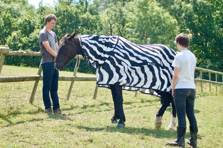 Joren Bruggink, de la Universidad Aeres de Ciencias Aplicadas, y Jai Lake, de la Universidad de Bristol, mientras investigan cómo se comportan las moscas alrededor de un caballo cubierto con una tela con rayas de cebra, en Los Ángeles. (EFE)