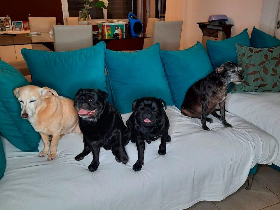 MAr Tarrés presentó a sus mascotas