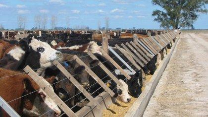 Crece el escándalo por el robo de vacas del siglo: encontraron más animales robados en el campo del ex Gobernador de Tucumán, José Alperovich