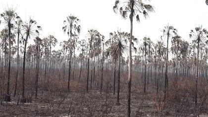 Más de un millón de hectáreas ya quedaron devastadas por los incendios en Bolivia