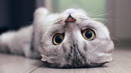 Gatos genéricas