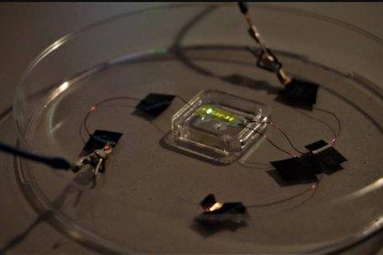 El tatuaje emplea diodos emisores de luz orgánicos (OLED)