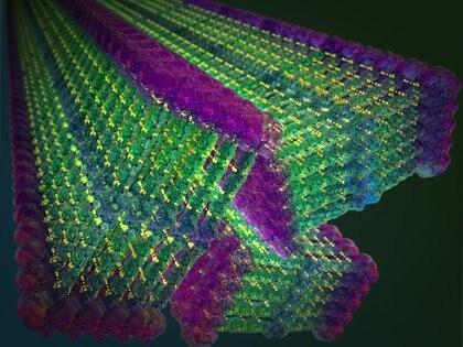 """21/12/2020 Los investigadores del MIT han diseñado pequeñas moléculas que forman espontáneamente nanocintas cuando se agrega agua. Estas moléculas incluyen un dominio de """"aramida"""" inspirado en Kevlar en su diseño, en verde, que fija cada molécula en su lugar. POLITICA INVESTIGACIÓN Y TECNOLOGÍA MIT"""