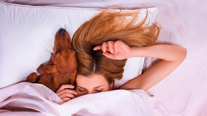 Las personas que durmieron con los perros en la cama consiguieron un 80% de eficiencia del sueño (Shutterstock)