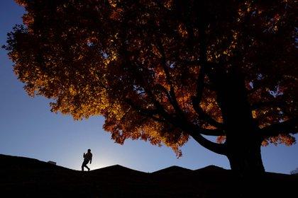 Un hombre sale de votar y pasa frnete a un arbol de maple junto al memorial de la primera Guerra Mundial en Kansa City, Misuri.