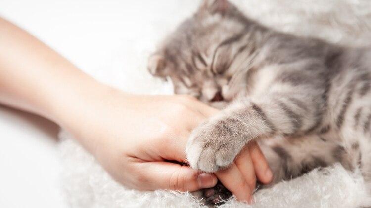 Muchas mascotas son utilizadas hoy en día en tratamientos como terapia asistida motivacional o física (Shutterstock.com)