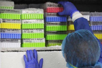 Los esteroides son medicamentos inmunosupresores (EFE/ Carlos Ortega/Archivo)