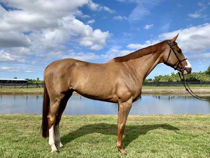 """La """"monita retrechera"""" estaba obsesionada con los caballos, tuvo varios de los menores criaderos del país con ejemplares de paso fino. (Foto de referencia: EFE)"""