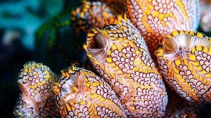 La revista Science ha publicado los resultados de los experimentos en el laboratorio de la plitidepsina, un fármaco antiviral procedente del fondo del mar (Foto: Shutterstock)