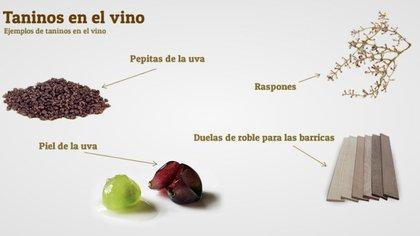 Los taninos en el vino