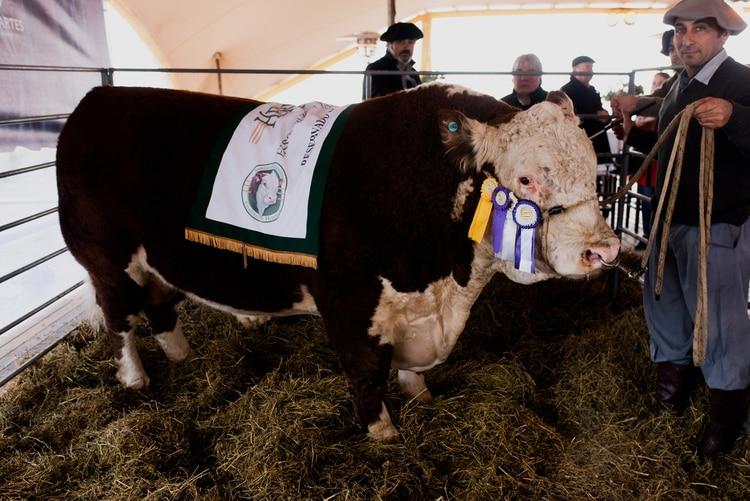 """Toro """"Gran Campeón"""" Hereford de La Rural 2019"""