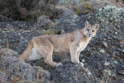 Foto: EFE/ Rewilding Argentina