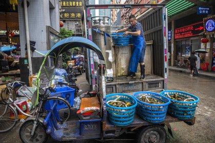Autoridades chinas encuentran muestras de COVID-19 en empaques de alimentos importados