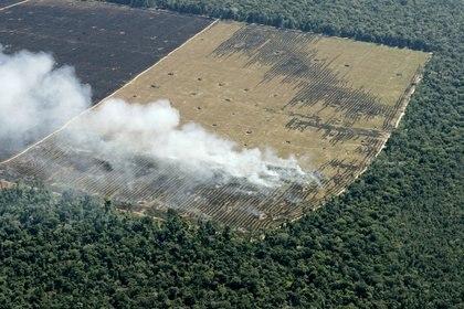 Cientos de hectáreas de lo que fue parte de la jungla del Amazonas en el estado Mato Grosso de Brasil (REUTERS/Rickey Rogers)