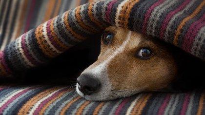 Los ruidos significan más intensidad y molestias para las mascotas