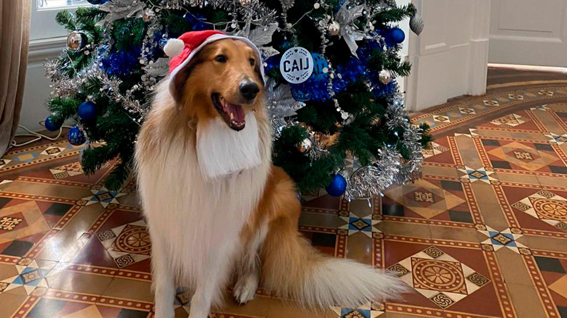 Imagen de un tuit de Dylan, el perro de Fernández, a la espera de Nochebuena. En Navidad, el Presidente tuiteó para explicar el primer paquete de medidas